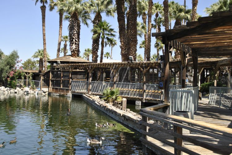 Watch the koi in our on-site lake, a rare tropical feature in the California desert