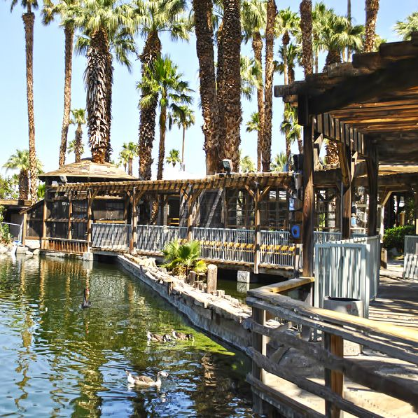 The tropical environment at our Desert Hot Springs RV Park