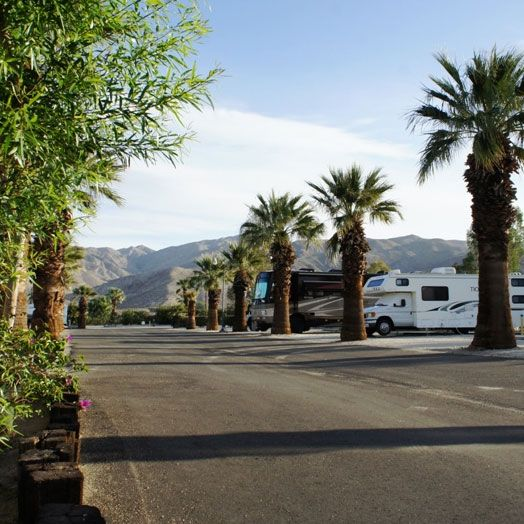 Palm trees line the streets of our RV Park sites in Desert Hot Springs