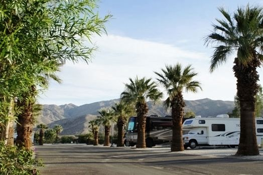 Our palm-tree lined Desert Hot Springs RV Park sites